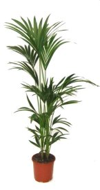 Indoor Trees For Home and Office | House Plants for You | House ...